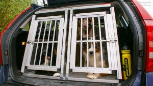 Hunde einer Hundetransportbox im Auto